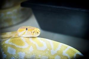 Snake 300x200